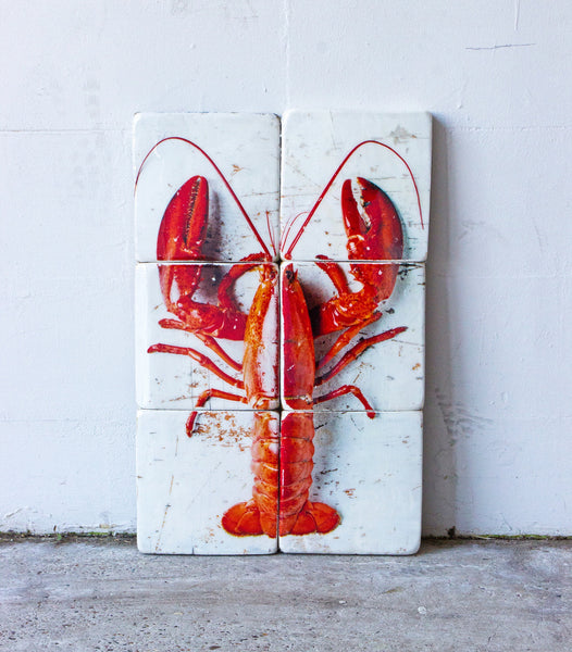 Cooked canner lobster on white (40cm x 60cm) - stigerwoods