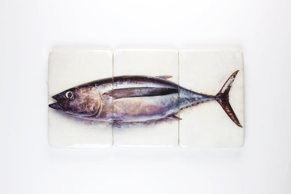 Albacore tuna on ice (60cm x 29cm)