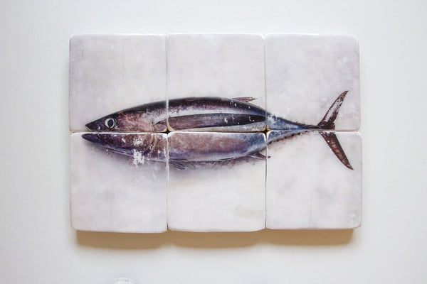 Albacore tuna on ice (60cm x 40cm)