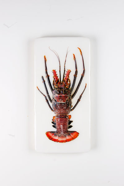 Black red spiny lobster (20xm x 40cm)