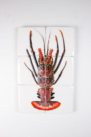 Black red spiny lobster (40cm x 60cm)