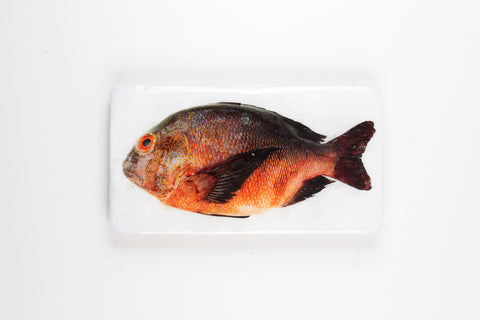 Brown orange Balinese fish (35cm x 20cm)