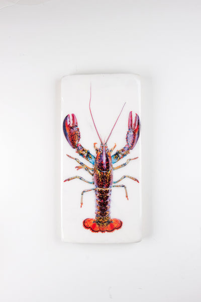 Canner lobster (20cm x 40cm)