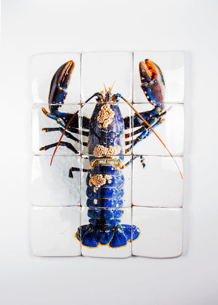 European lobster barnacles (60cm x80cm)