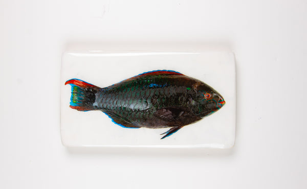 Dark green parrot fish (35cm x 20cm)