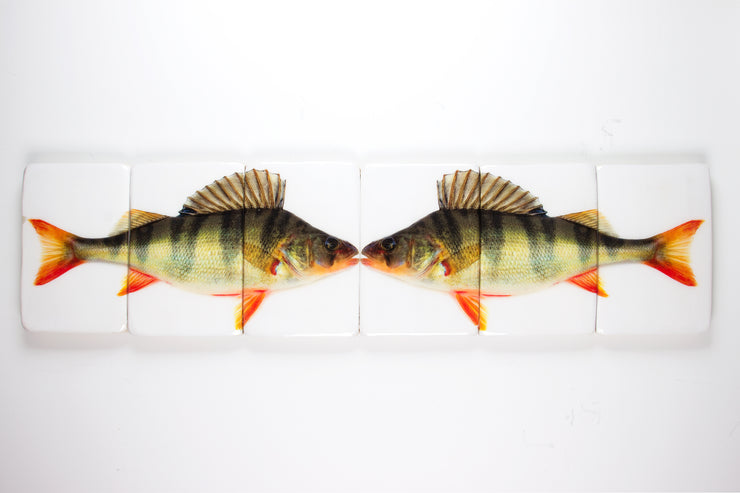 Double fresh water bass (120cm x 29cm)