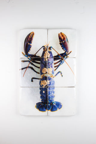 European lobster barnacles (40cm x 60cm)