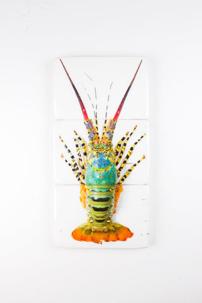 Jual lobster laut / Rainbow lobster (29cm x 60cm)