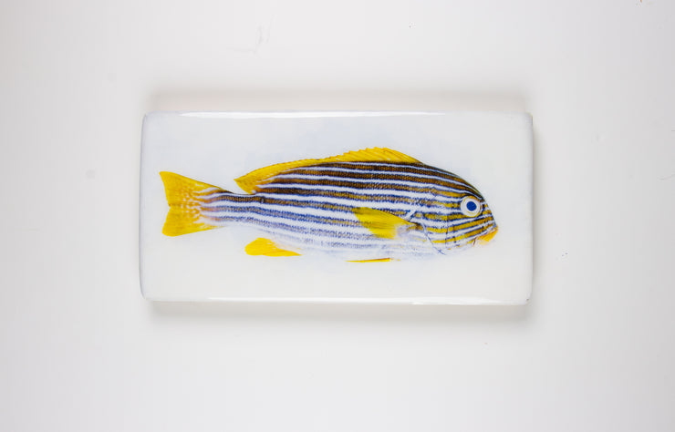 Lined sweetlips (40cm x 20cm)