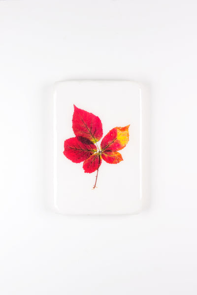 Red autumn leaves (20cm x29cm)