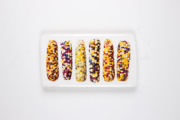 Six glass gem corn (35cm x 20cm)