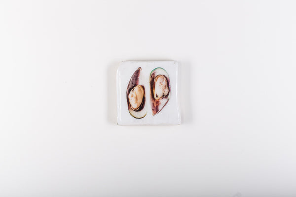Two white mussels (20cm x 20cm)