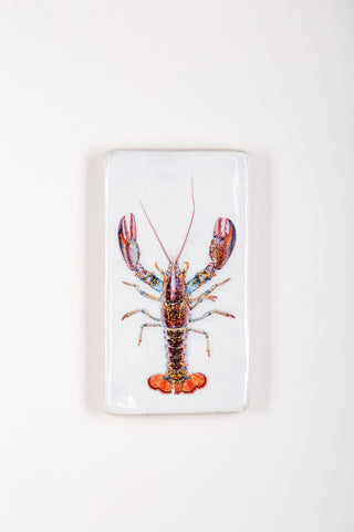 Canner lobster (20cm x 35cm)