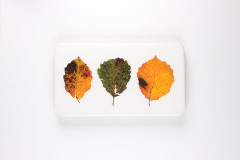 Three beech leaves (35cm x 20cm)