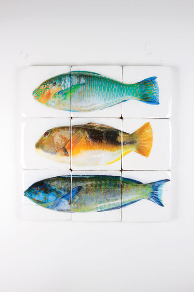 Three parrot fishes (60cm x 60cm)