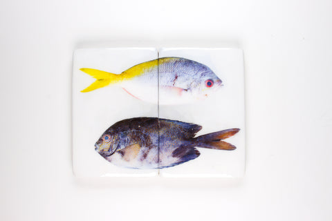 Yellowtail fusilier and Gold-spotted rabbitfish (40cm x 29cm)