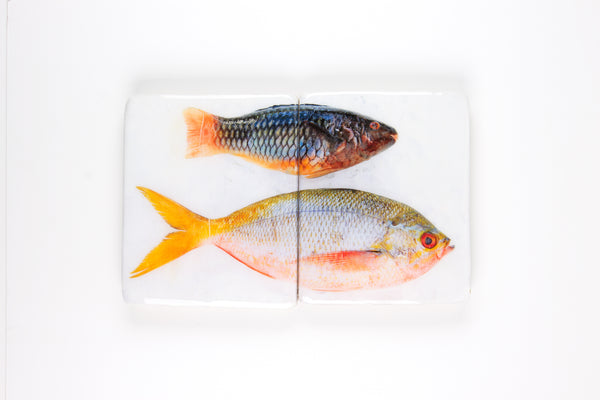 Parrotfish and yellowtail fuselier (40cm x 24cm)