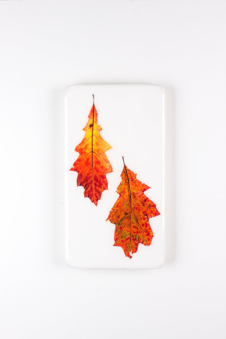Two oak leaves (20cm x 35cm)