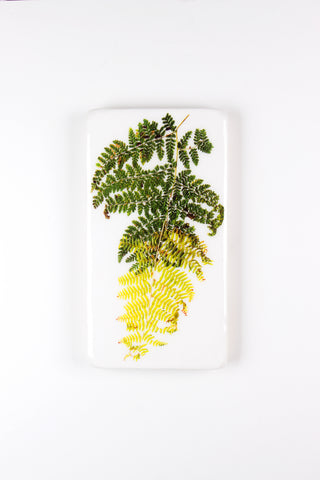 Two fern leaves (20cm x 35cm)
