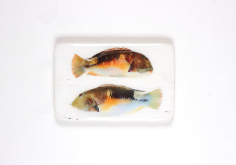Two parrot fishes (29cm x 20cm)