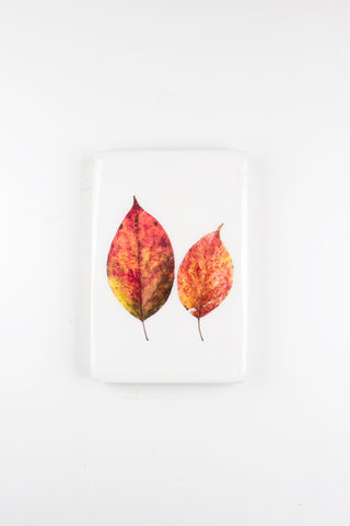 Two autumn leaves (20cm x 29cm)