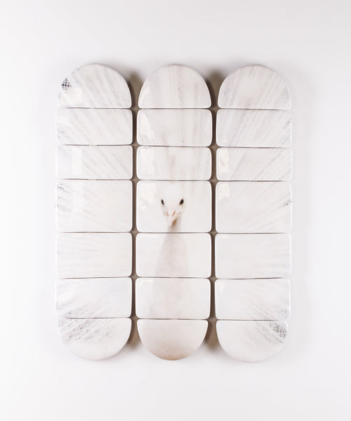 White peacock decks (60cm x 80cm)
