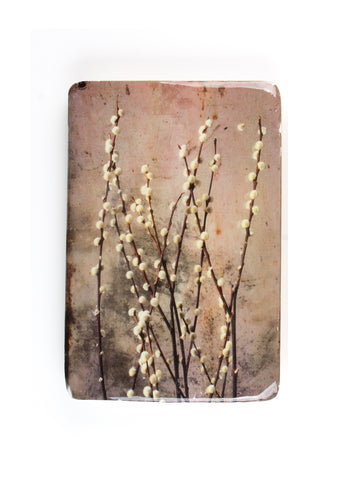 Willow catkin (20cm x 29cm)