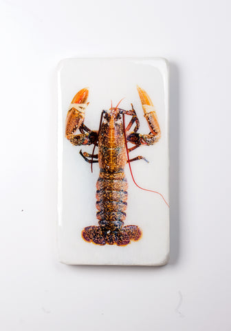 Yellow european lobster (20cm x35cm)