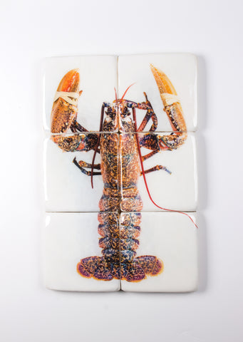 Yellow european lobster (40cm x 60cm)