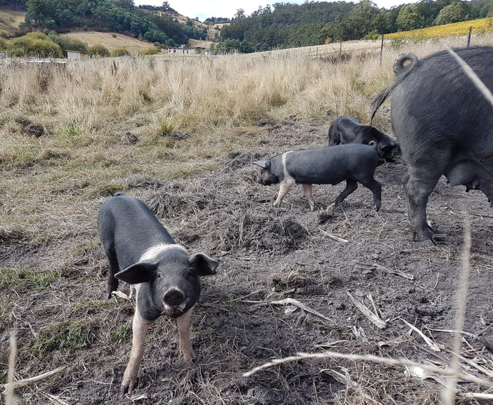 A day at Fat Pig Farm – The perfect 40th Birthday Present