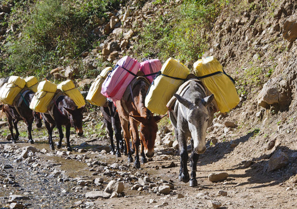 pack mules on mountain trail