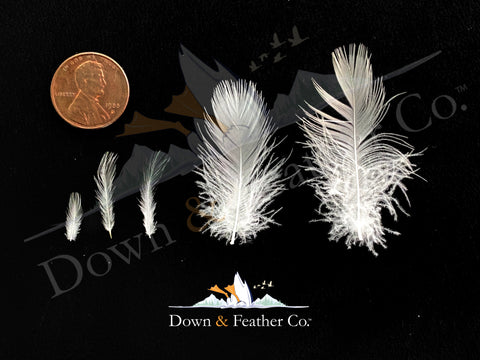 what a pillow feather looks like