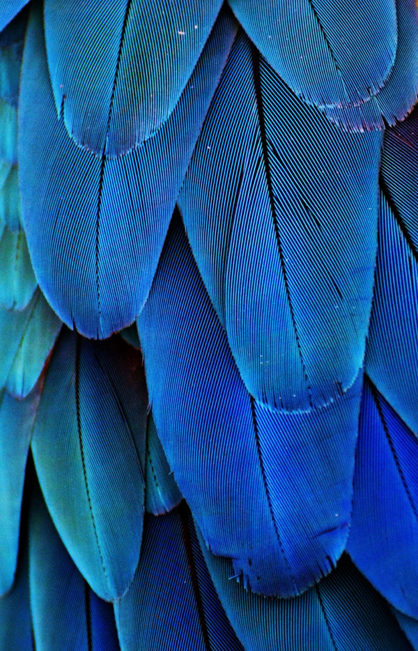 Transforming from Leaf Green to Feather Blue