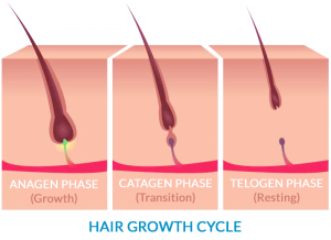 hair-growth-cycle
