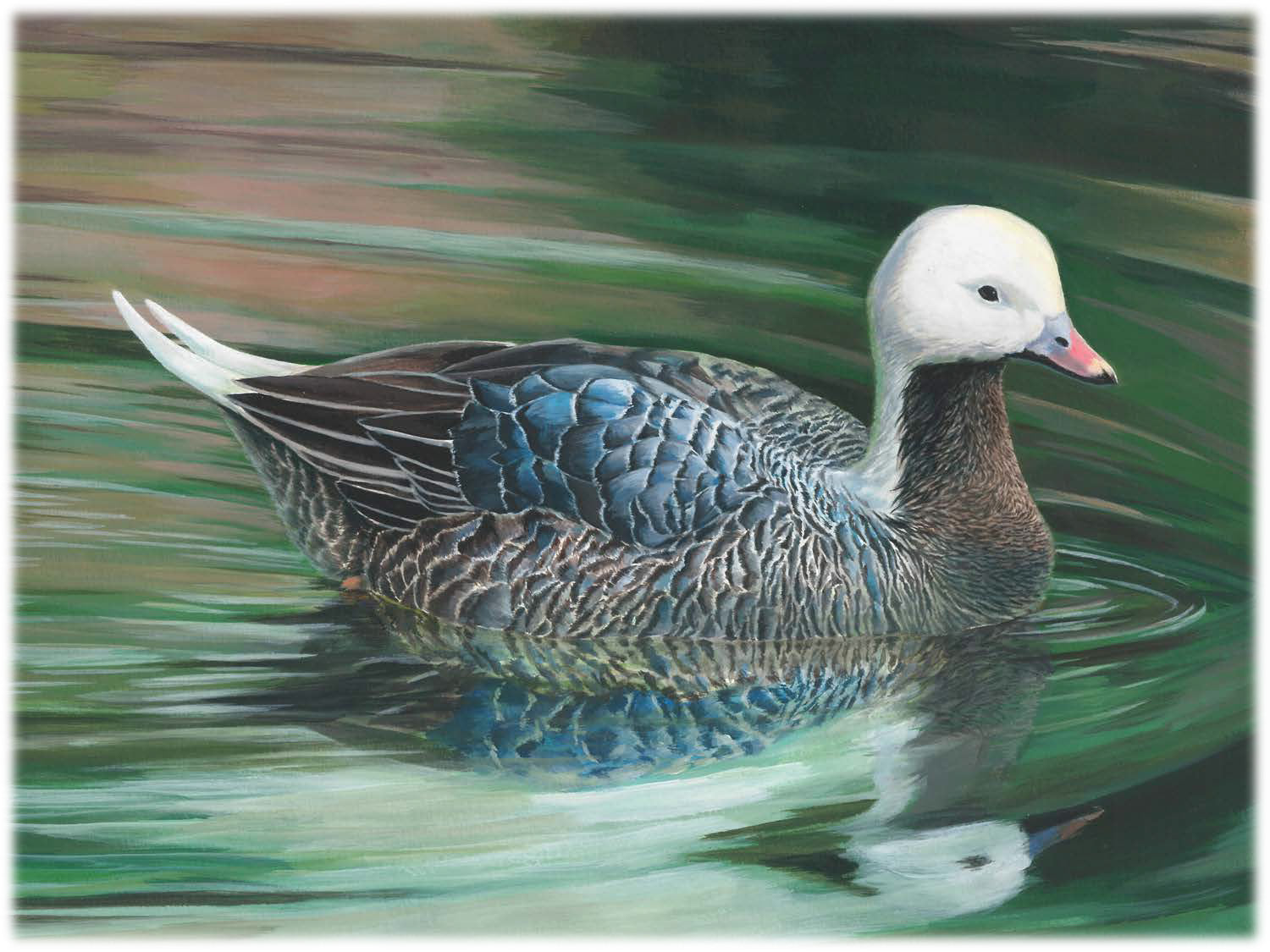 Duck stamp contest