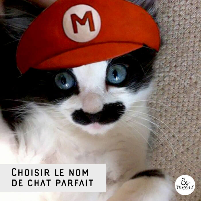 Choisir un nom de chat par So Meow