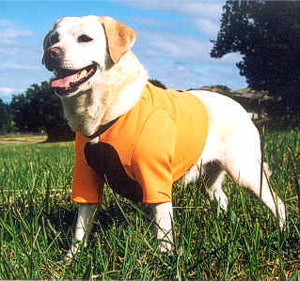 Remember an orange vest for your dogs too