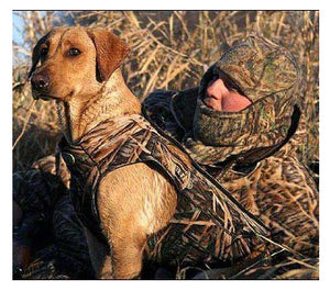 Keep your dog warm while hunting
