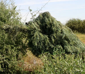 Learning a little more about ghillie suits