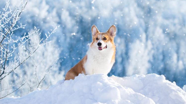 How to prevent hypothermia on your hounds