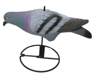 Basics about Pigeons Hunting