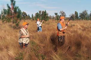 The Excitement of Quail Hunting