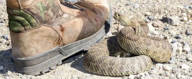 Snake Proof Boots