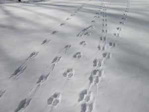 Tips for snow tracking