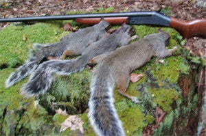 Early Season Squirrel Hunting Tips