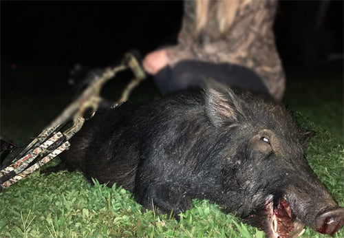 Essentials about Wild Boar Hunting