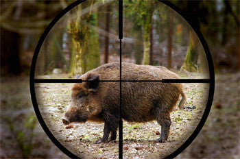 Tips for the Wild Boar Beginner Hunter