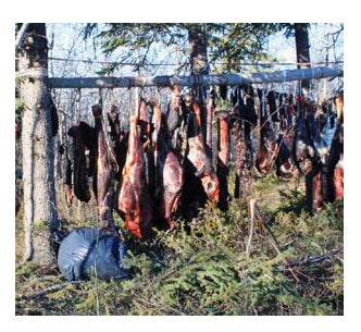 Meat preservation after killing an animal is mandatory in Alaska