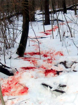 Blood Trail when Hunting on Snow