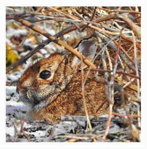 Cottontail on deep cover